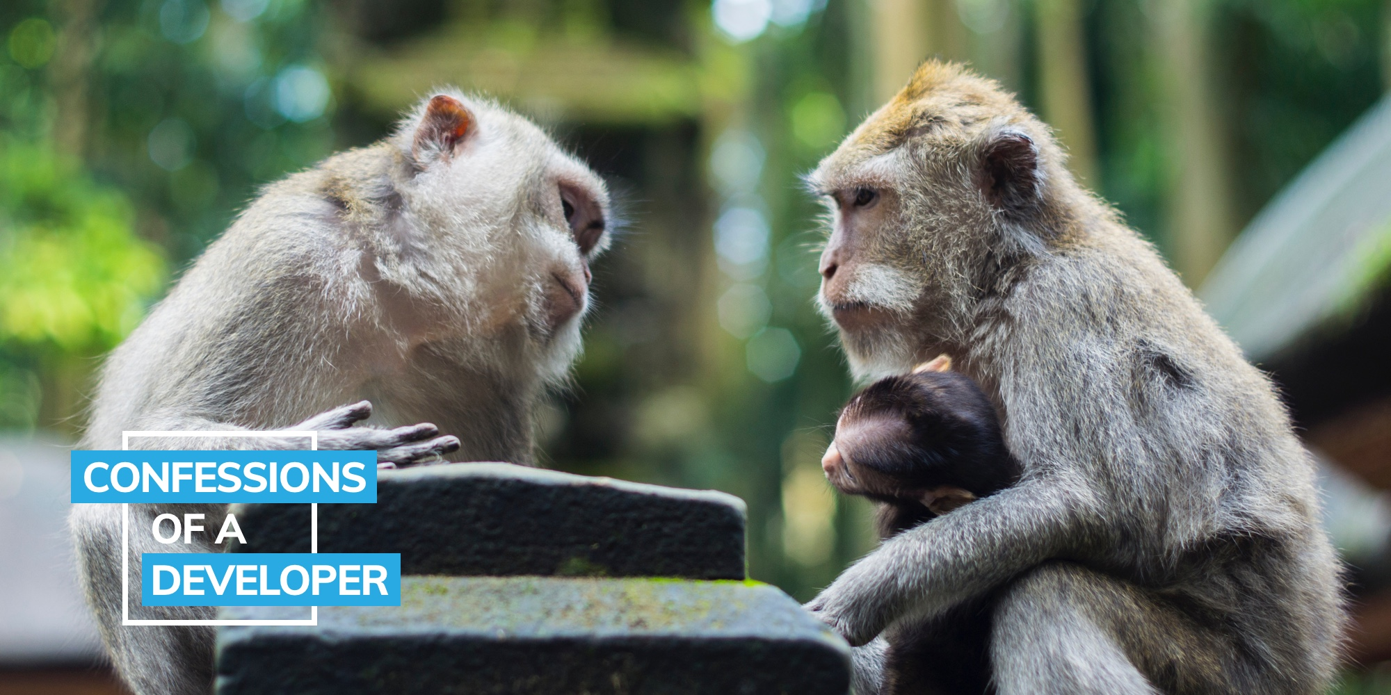 Blog image with 2 monkeys communicating with each other