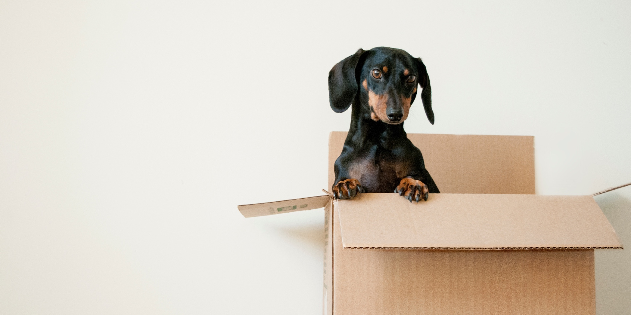 Out of the Box vs. custom software solutions picture of puppy in a box