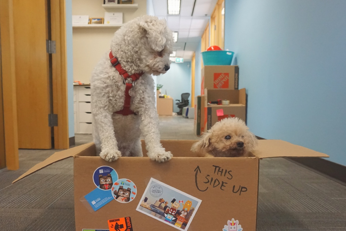 Two small dogs in moving box
