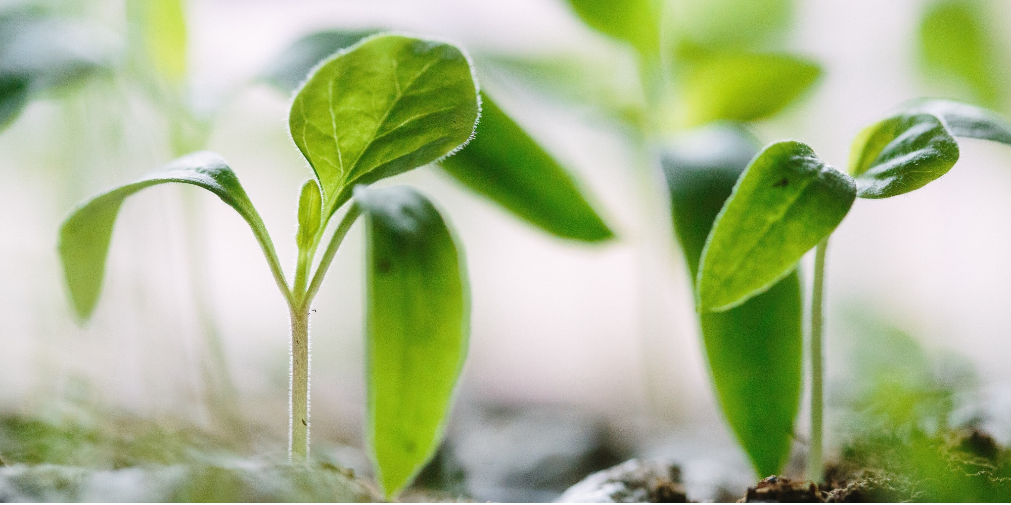 Picture of plants sprouting